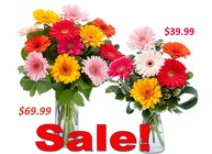 Gerbera's Galore Special in Beavercreek, Ohio, near Dayton, OH