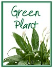 Green Plant Deal of the Day in Beavercreek, Ohio, near Dayton, OH