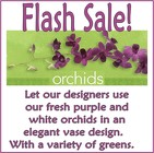 Flash Sale Orchids in Beavercreek, Ohio, near Dayton, OH